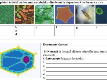 Clasa a VI-a. Biologia. Evaluare