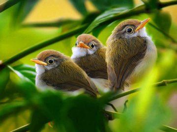Clasa X. Biologie. Tema: Clasa Păsări